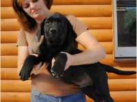 puppies_lola_achilles4