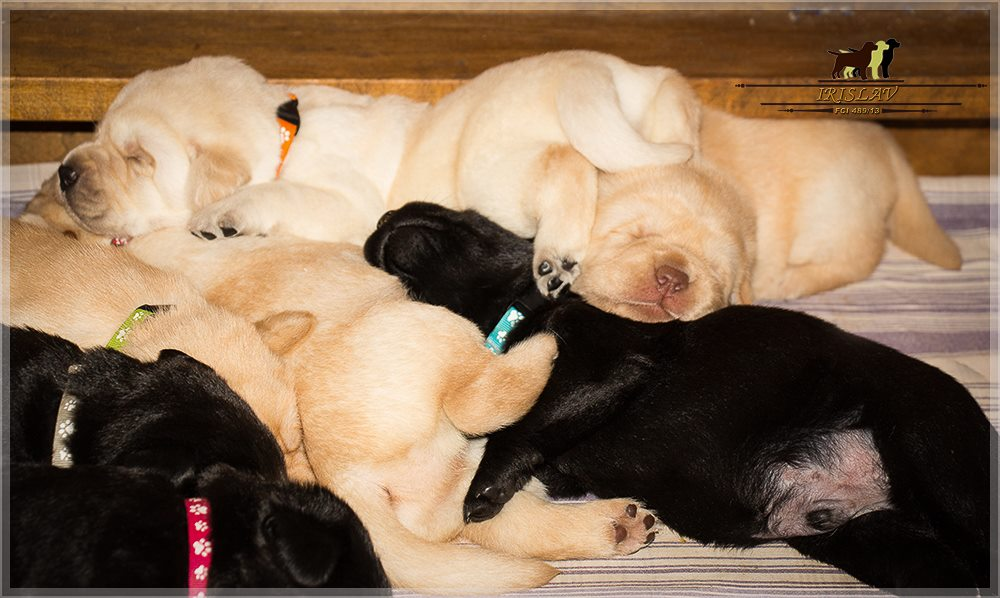 puppies available 2